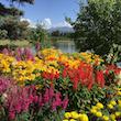 Alaska Blooms