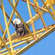 Eagle Loves Crane
