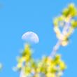 Moonbud