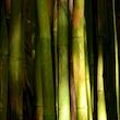Waimoku Bamboo Forest