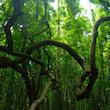 Waimoku Falls Bamboo