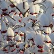 Winter's Burden